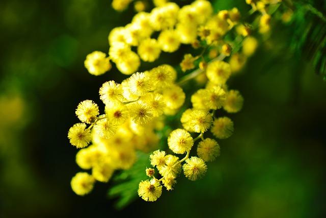 paris-flower-03