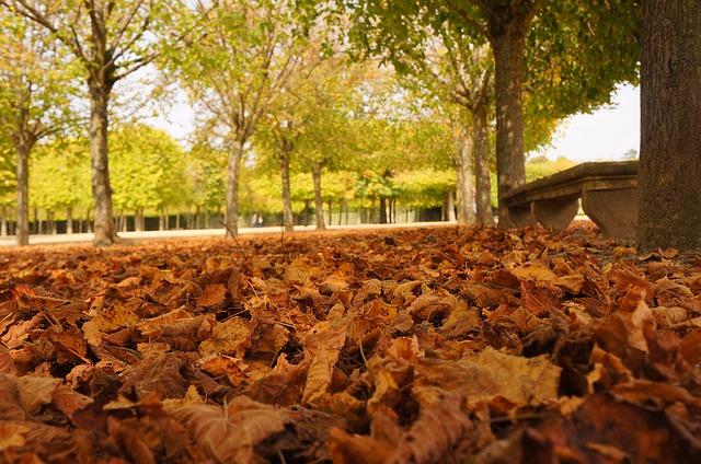 autumn-in-paris-01
